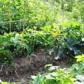Orto e giardino biodinamico, i lavori di gennaio e febbraio
